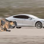Tesla-Cheetah-Stance-Launch-Mode
