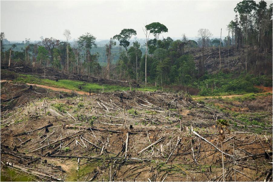 rainforestdestr