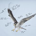 rolls-royce-wraith-falcon-embroidery-6